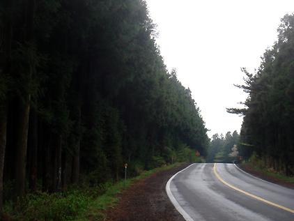 삼나무숲길